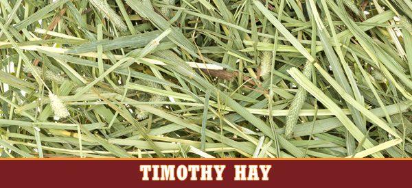Timothy Hay